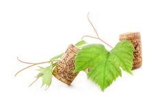 Corcho del vino con las hojas del ejemplo y del verde de la uva Imágenes de archivo libres de regalías