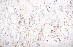 Corcho natural de la textura Imagenes de archivo