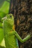 A corcunda cheirou o lagarto na árvore imagens de stock royalty free