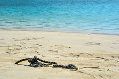 Cord at beach Stock Photography