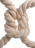 Cord with knot. Stock Images