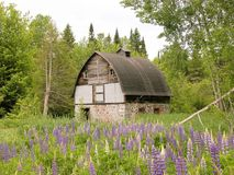 Cord wood barn in countryside. Scenic view of traditional cord wood farm in flowery meadow with forest in background, Michigan, U.S.A Stock Photography