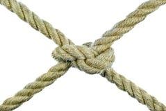 A corda amarrada em um nó em um fundo branco. Imagem de Stock