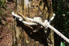 Corda del nodo sull'albero Immagini Stock Libere da Diritti