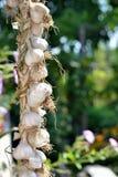 Corda dell'aglio Fotografia Stock Libera da Diritti