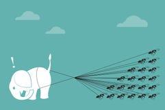 Corda della formica e dell'elefante che tira insieme Fotografia Stock Libera da Diritti