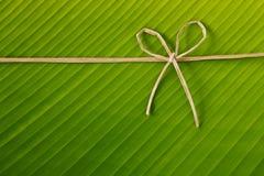 Corda e foglio della banana Fotografia Stock