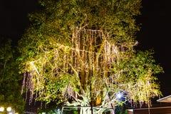 A corda exterior decorativa ilumina a suspens?o na ?rvore no jardim na noite fotos de stock