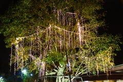A corda exterior decorativa ilumina a suspens?o na ?rvore no jardim na noite imagem de stock