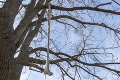 Corda grossa amarrada a uma árvore, contra um fundo do céu azul fotos de stock royalty free