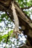 Corda legata su un albero fotografie stock libere da diritti