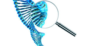 Corda umana del DNA Fotografie Stock