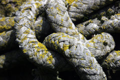 Corda vecchia con la muffa Fotografia Stock Libera da Diritti