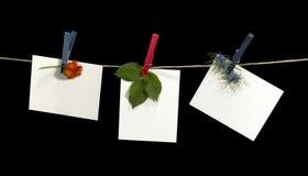 Corde à linge et labels avec des fleurs Images libres de droits