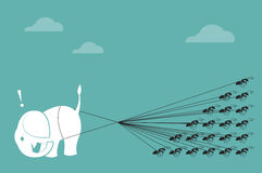 Corde d'éléphant et de fourmi rassemblant Photographie stock libre de droits