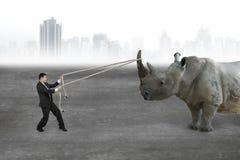 Corde de traction d'homme d'affaires contre le rhinocéros sur le plancher en béton Images libres de droits