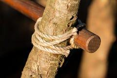 Corde en bois d'arbre Photos stock