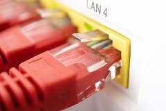Corde et connecteur de correction de connexion pour le plan rapproché d'Internet Couleur rouge Photos libres de droits