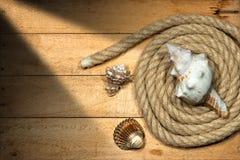 Corde et coquillages sur le fond en bois photos libres de droits