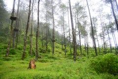 Corde nella foresta Fotografie Stock