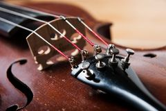 Corde, ponte e regolare del violino i pioli Immagine Stock