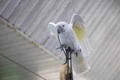 Corde raide de recyclage de perroquet photographie stock