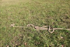 Corde tressée épaisse sur l'herbe Photographie stock libre de droits