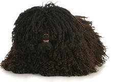 Corded puli Stock Images