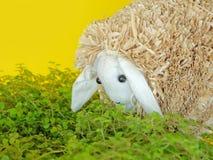 Cordero de alimentación con la hierba Ovejas decorativas Foto de archivo libre de regalías