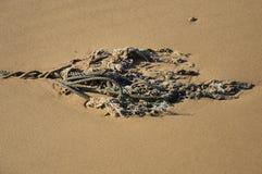 Cordes de marin Image stock