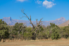 Cordilheira de Drakensberg Foto de Stock Royalty Free