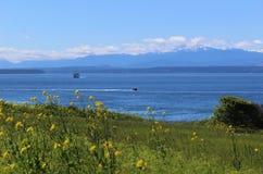 Cordilheira e opinião olímpicas de Puget Sound através de um campo na ilha de Whidbey Foto de Stock