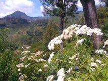 Cordillera Badulla Sri Lanka foto de archivo