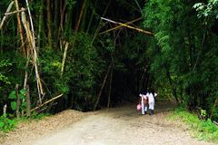 Young local women on a path in jungle forest - Cordiliera Central. The Cordillera Central English: Central Andes is the highest of the three branches of the royalty free stock photos