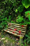 Old wooden bench in the jungle, Cordiliera Central. The Cordillera Central English: Central Andes is the highest of the three branches of the Colombian Andes royalty free stock photography