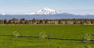 Cordillera de Jefferson Stands Majestic Oregon Cascade del soporte Imágenes de archivo libres de regalías