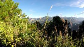 Cordillera de Cordillera, río enorme abajo almacen de metraje de vídeo