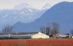 Cordillera de Sumas de Washington imagen de archivo