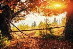 Cordillera en las montañas cárpatas en la estación del otoño Fotos de archivo