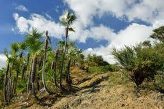 Cordillera Sierra Maestra en Cuba fotografía de archivo libre de regalías
