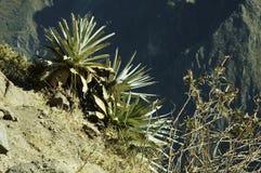 Cordilleras landscape Royalty Free Stock Photography