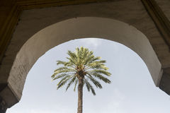 Cordoba Andalucia, Spain: cathedral courtyard Stock Photo