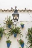 Cordoba Andalucia, Spain: court patio Stock Images
