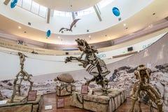 Natural Sciences Museum Museo Provincial de Ciencias Naturales Interior - Cordoba, Argentina. Cordoba, Argentina - May 2, 2018: Natural Sciences Museum Museo stock photography