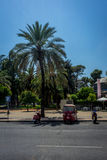 Cordoba, Spain - June 20 : A tall palm tree and a scooter in the Stock Image