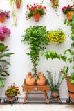 Cordoba uteplatsFest - den privata borggården med blommor dekorerade, arkivfoton
