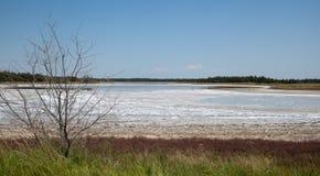 Cordon affecté de sécheresse Images stock