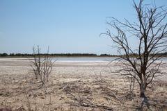 Cordon affecté de sécheresse Photographie stock libre de droits