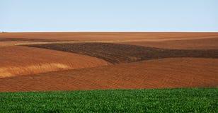 Cordon cultivé en Bulgarie image stock