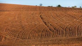 Cordon cultivé en Bulgarie image libre de droits